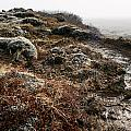 Iceland Barren Landscape by Francesco Emanuele Carucci