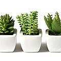 Indoor Plants by Boon Mee