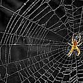 Itsy Bitsy Spider My Ass 3 by Steve Harrington