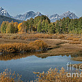 Kiss Of Fall In The Grand Tetons by Sandra Bronstein
