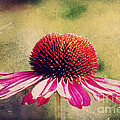 Last Summer Feeling by Angela Doelling AD DESIGN Photo and PhotoArt