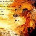 Lion Of Judah Courage  by Amanda Dinan