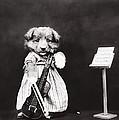 Little Fiddler by Aged Pixel
