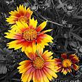 Living Color by Diane E Berry