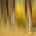 Lost In Autumn by Beve Brown-Clark Photography