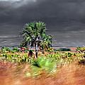 Madagascar L'ile Rouge