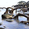 Mangrove Tree Roots by Dirk Ercken