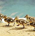 March Of The Ducklings by Fraida Gutovich