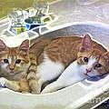 Mary's Cats by Joan  Minchak