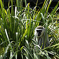 Monkey In The Grass by Graham Palmer