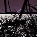Moonlight Fisherman by Christy Usilton