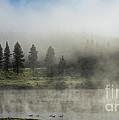 Morning Fog On The Yellowstone by Sandra Bronstein