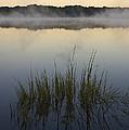 Morning Mist At Sunrise by David Gordon