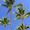 Morning Palms by Elena Elisseeva