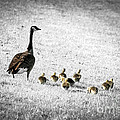 Mother Goose by Elena Elisseeva