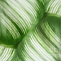 Nature Leaves Abstract In Green 2 by Natalie Kinnear