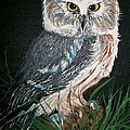 Northern Saw-whet Owl by Sharon Duguay