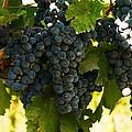 October Vintage Bonair Winery  by Jeff Swan