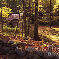 Old Mountain Shed by Paul W Faust -  Impressions of Light
