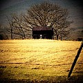 Old Shed by Michael L Kimble