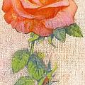 Pale Rose by George Adamson