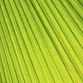 Palm Tree Leaf Abstract by Elena Elisseeva