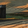 Palouse Sunset by Sandra Bronstein