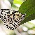 Paper Kite On A Leaf by Ruth Jolly