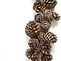Pine Cones by Edward Fielding