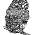 Pointillism Sawhet Owl by Renee Forth-Fukumoto