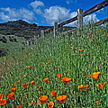 Poppies And The Fence by Kathy Yates
