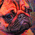 Pug 20130126v2 by Wingsdomain Art and Photography