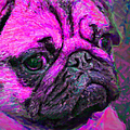 Pug 20130126v3 by Wingsdomain Art and Photography
