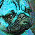Pug 20130126v5 by Wingsdomain Art and Photography
