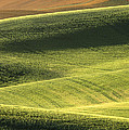Quiet Morning In The Palouse  by Sandra Bronstein