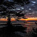 Quoddy Sunrise by Marty Saccone