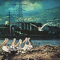 Radioactive Days by Taylan Apukovska