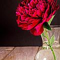 Red Peony Flower Vase by Edward Fielding