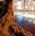 Reflection Of Spring by Bernard Chen