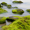 Rocks Or Boulders Covered With Green Seaweed Bading In Misty Sea  by Dirk Ercken