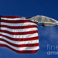 Salute The Flag by Tim Wilson