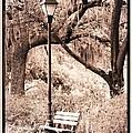 Savannah Bench Sepia by Carol Groenen