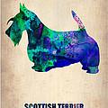 Scottish Terrier Poster by Naxart Studio