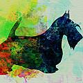 Scottish Terrier Watercolor by Naxart Studio