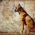 Semper Fidelis by Judy Wood