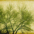 Serene Green 2 by Wendy J St Christopher