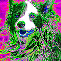 Sheep Dog 20130125v2 by Wingsdomain Art and Photography