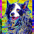 Sheep Dog Three 20130125 by Wingsdomain Art and Photography