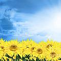 Sky Sunflower by Boon Mee