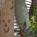 Smiley Tree by Aimee L Maher Photography and Art Visit ALMGallerydotcom